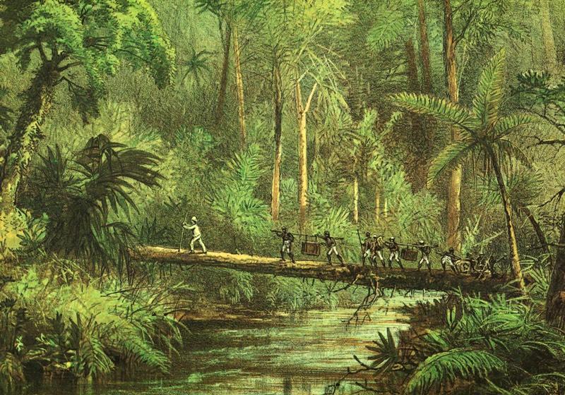 regnskove i det tropiske klima