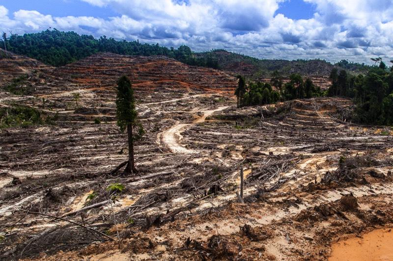 Hvorfor fælder man regnskoven? | Regnskoven - klodens rigeste økosystem